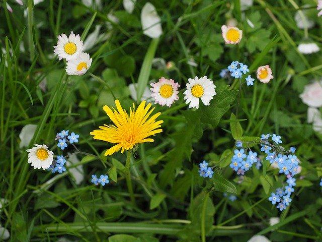 flowersremindsustheseparation