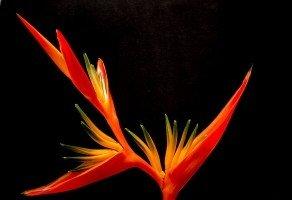 SCP-FlowerMonster1.jpg