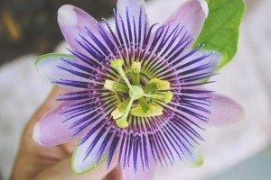 SCP-FlowerMonster2.jpg