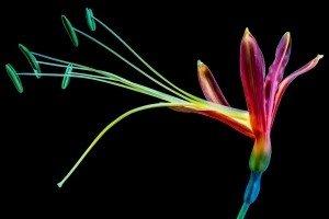 SCP-FlowerMonster3.jpg